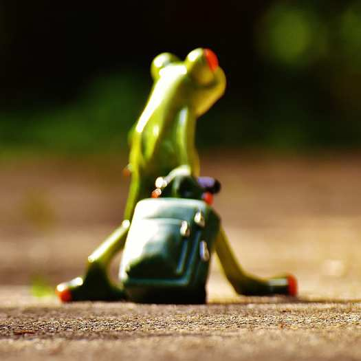 frog-leaving_525x525